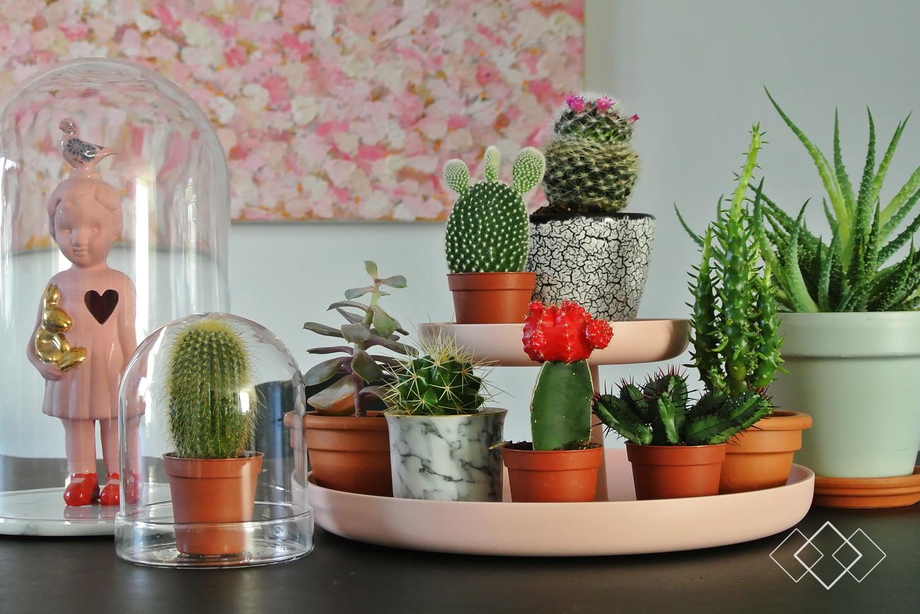 Cactus - liggend