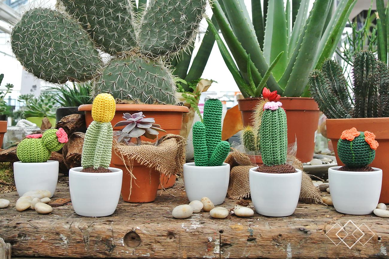 Cactussen - liggend 1