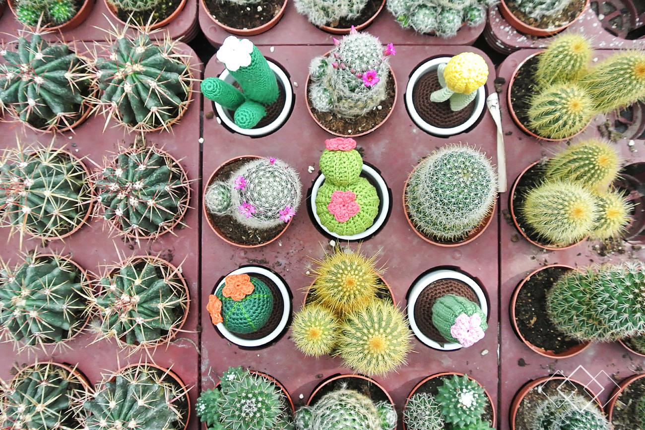 Cactussen - liggend 2