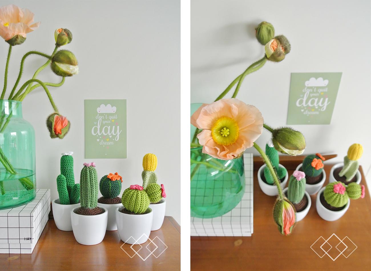 cactus winnaar