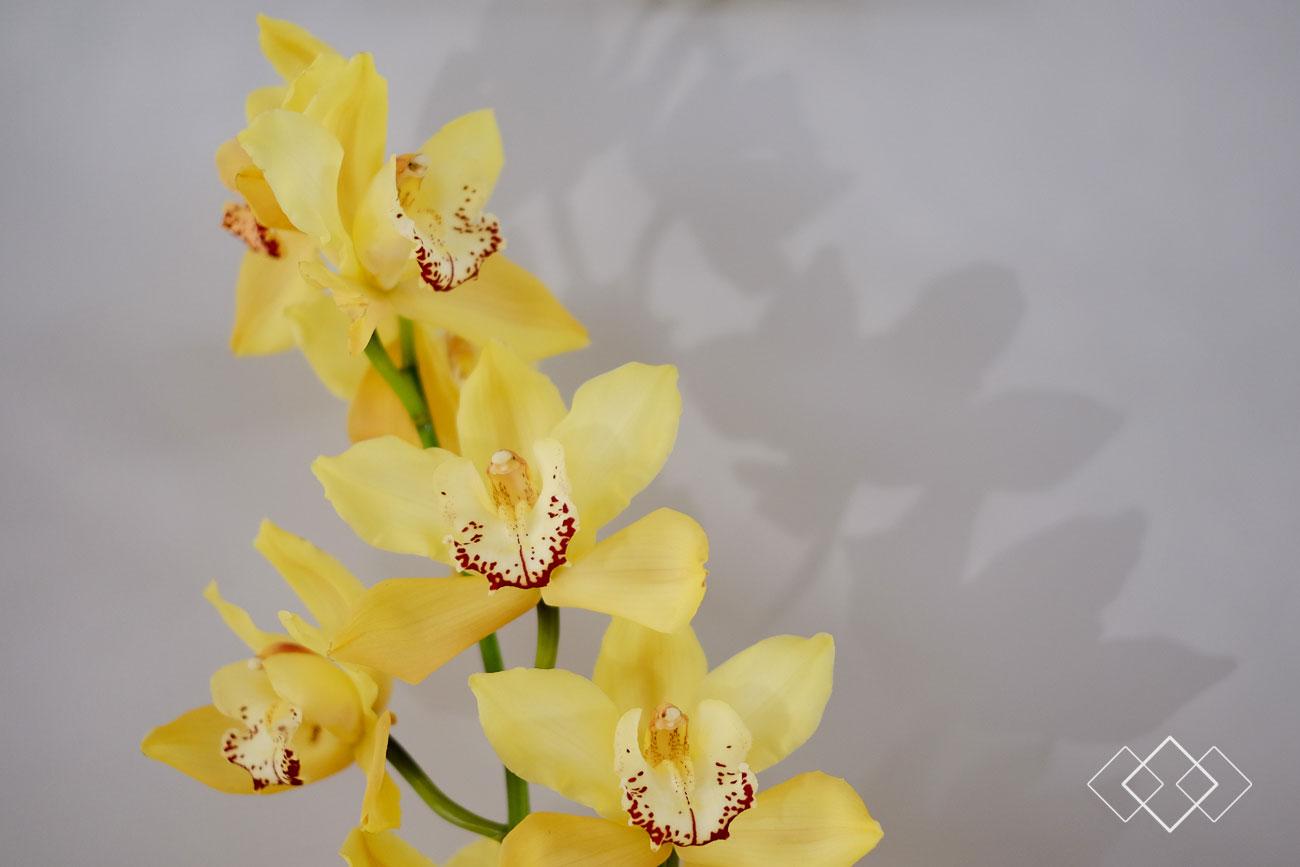 geel6