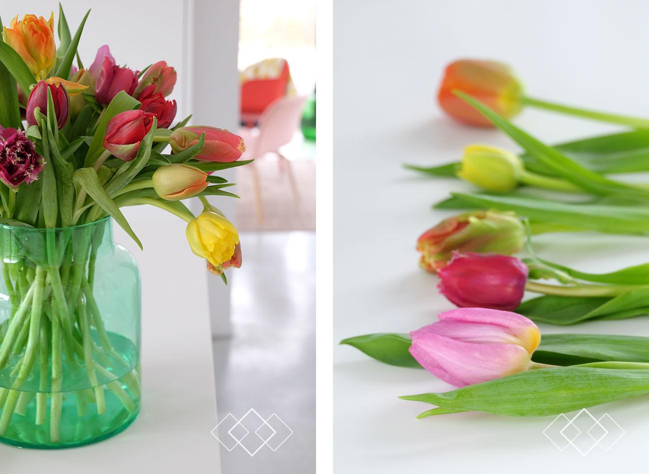 tulpen-6