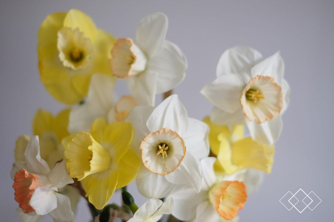 tulpen-plukken-1