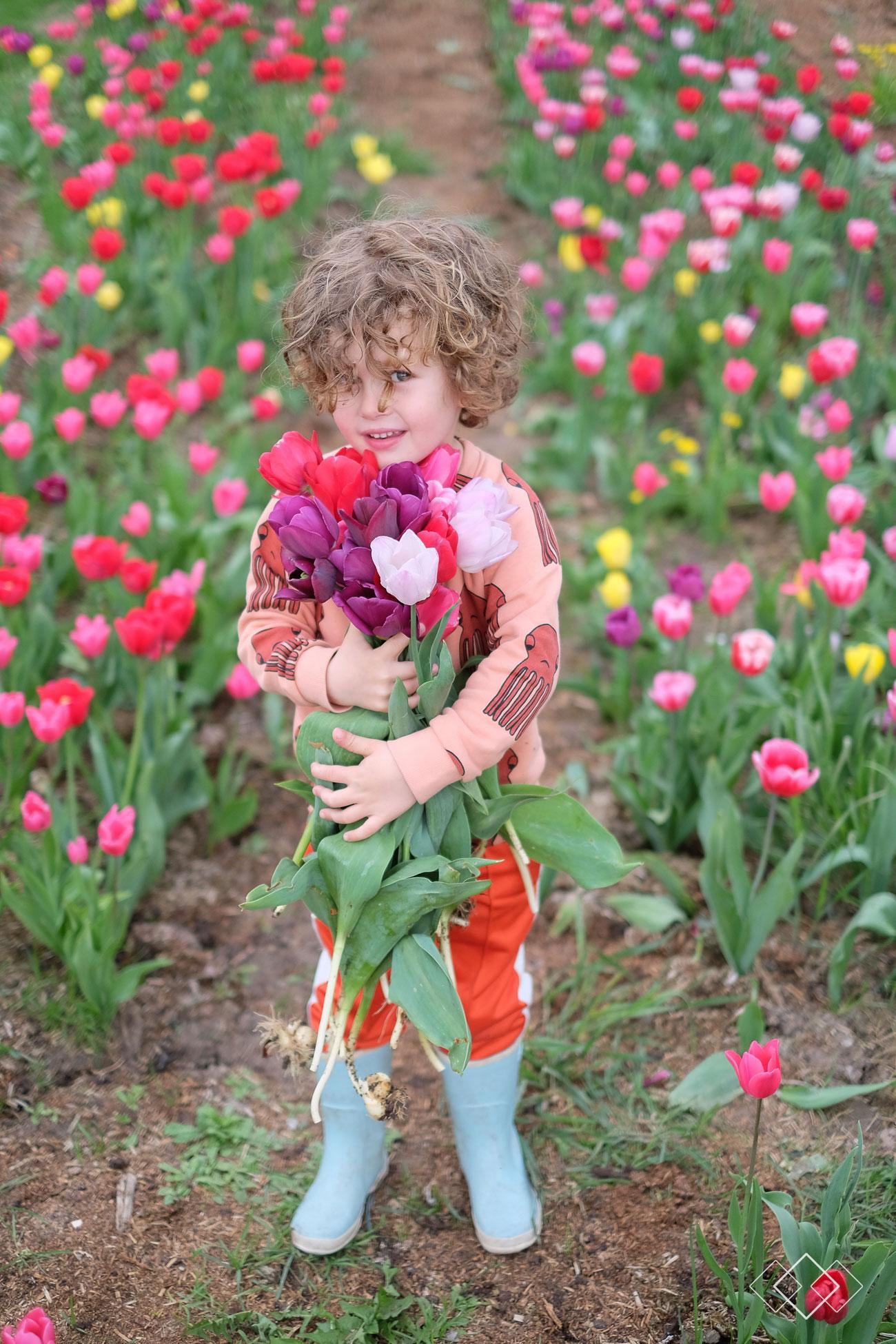 tulpen-plukken-4
