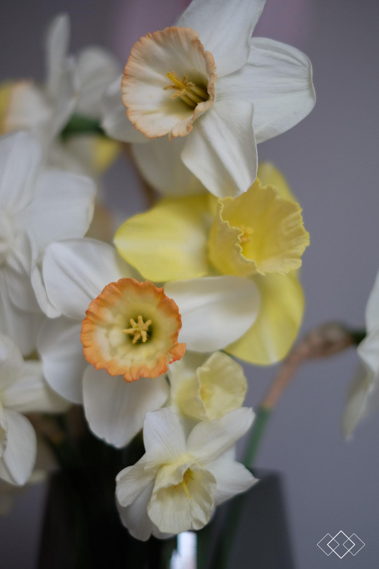 tulpen-plukken-6
